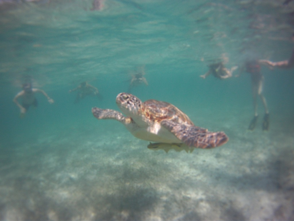Snorkelling with turtles in Akumal, Mexico