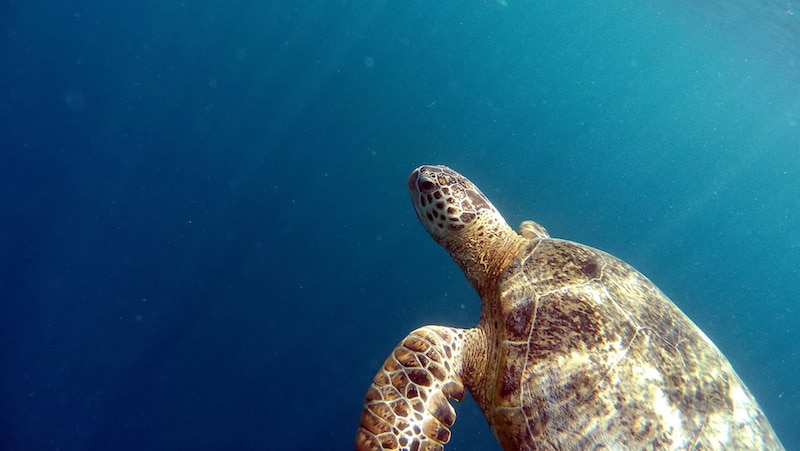 Read This Before Visiting Akumal, Mexico (turtles, tips and more!)