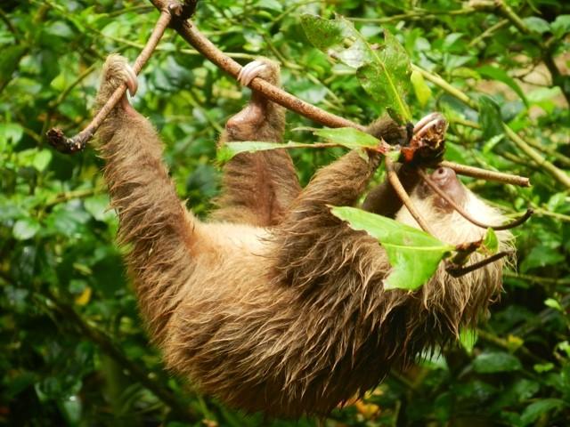 Wanderlust Chloe Costa Rica Sloth 2