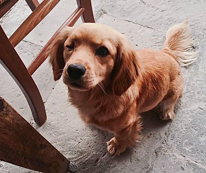 Wanderlust Chloe Kale Konak Cave Hotel Cappadocia Dog 1 Bubbles