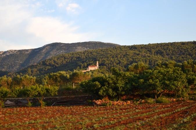 Hora Vineyard Hvar View
