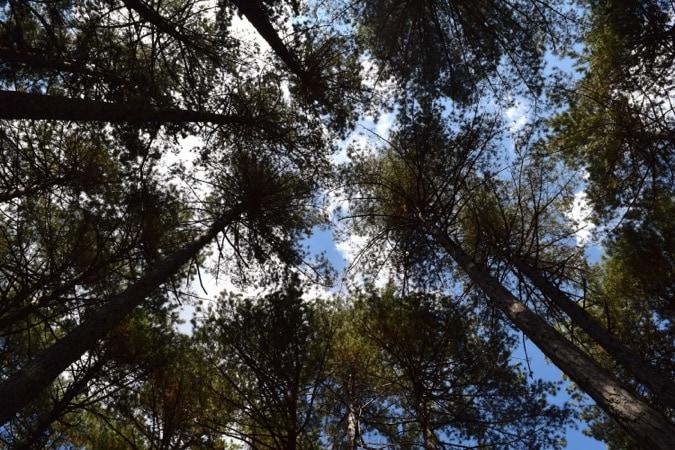 Forrest above Alanya