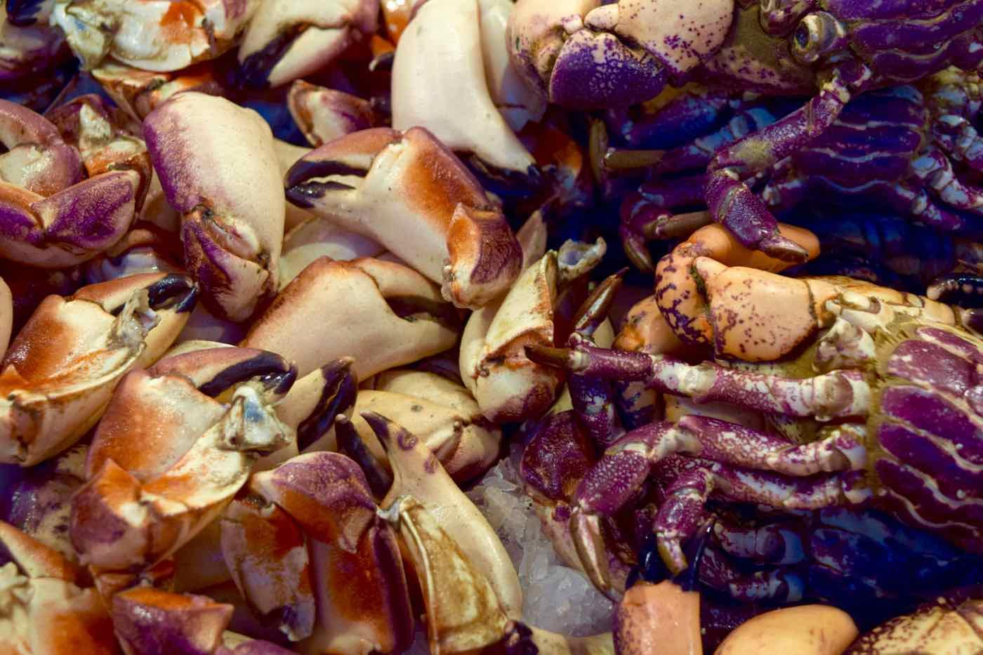 Seafood in Mercado Central, Santiago, Chile