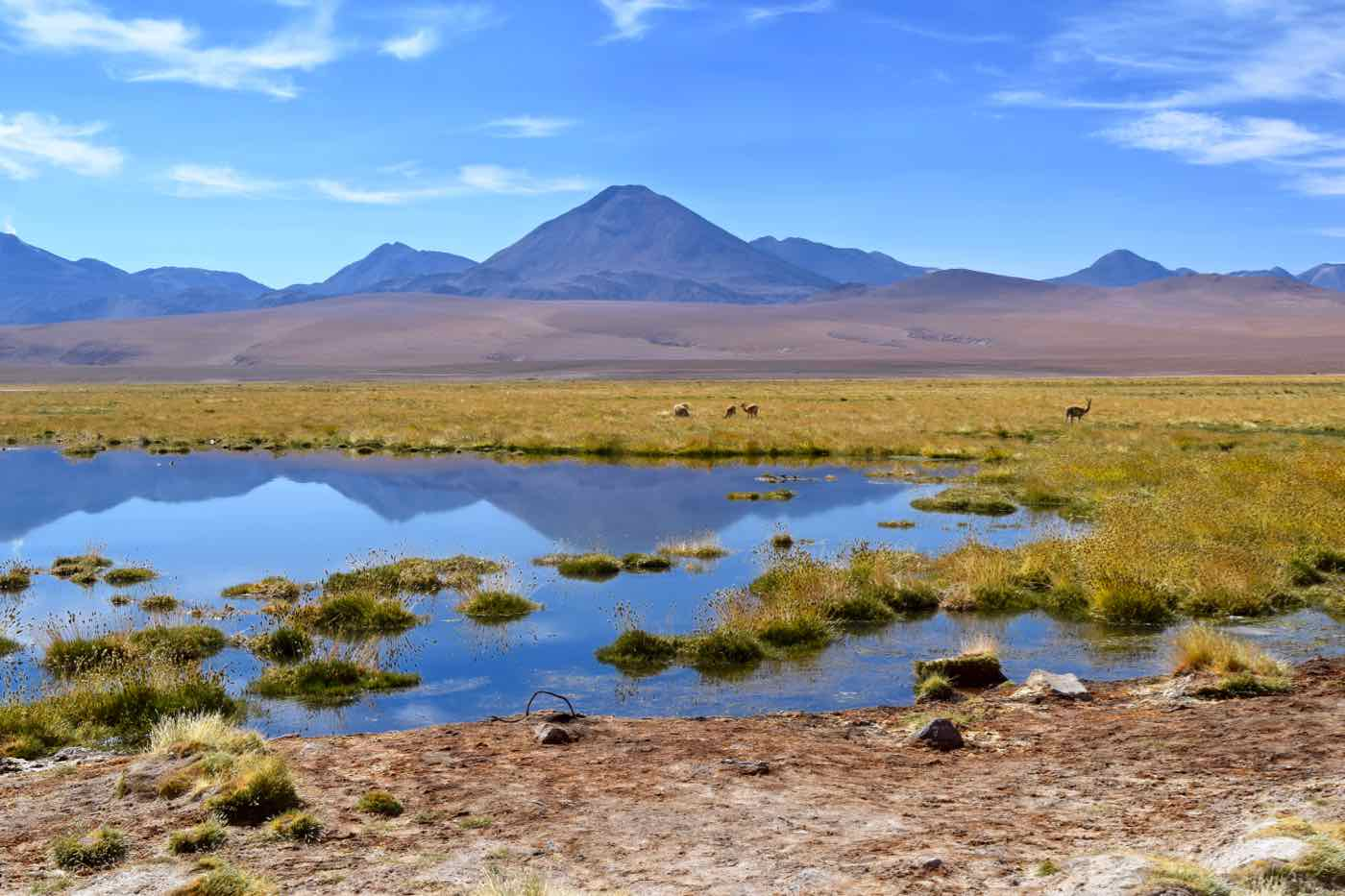 Lagoon on the way from El Tatio Geysers to San Pedro De Atacama