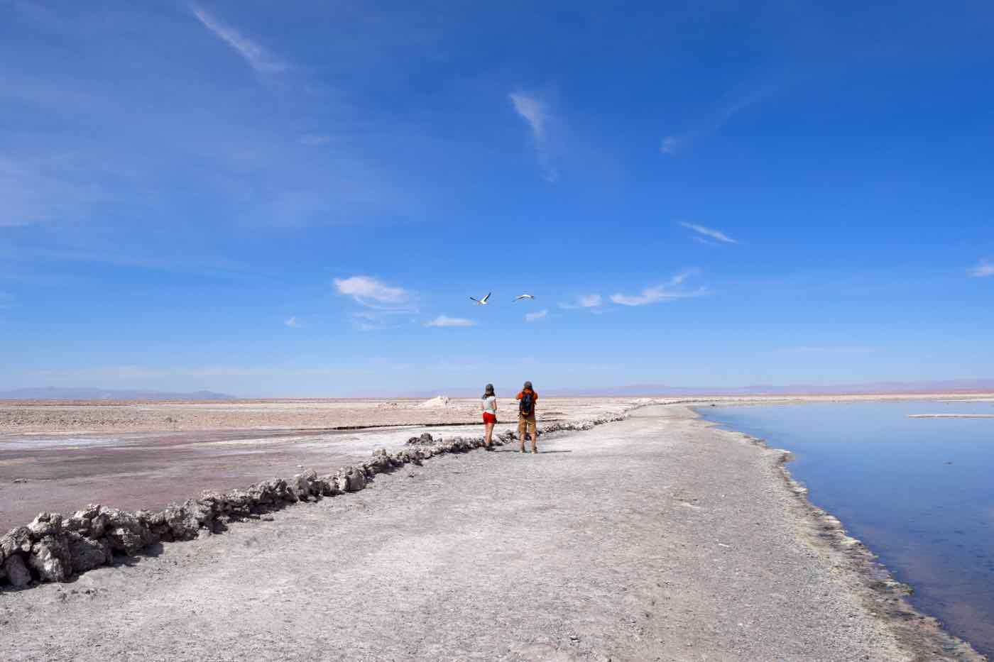 Chaxa Lagoon, Chile