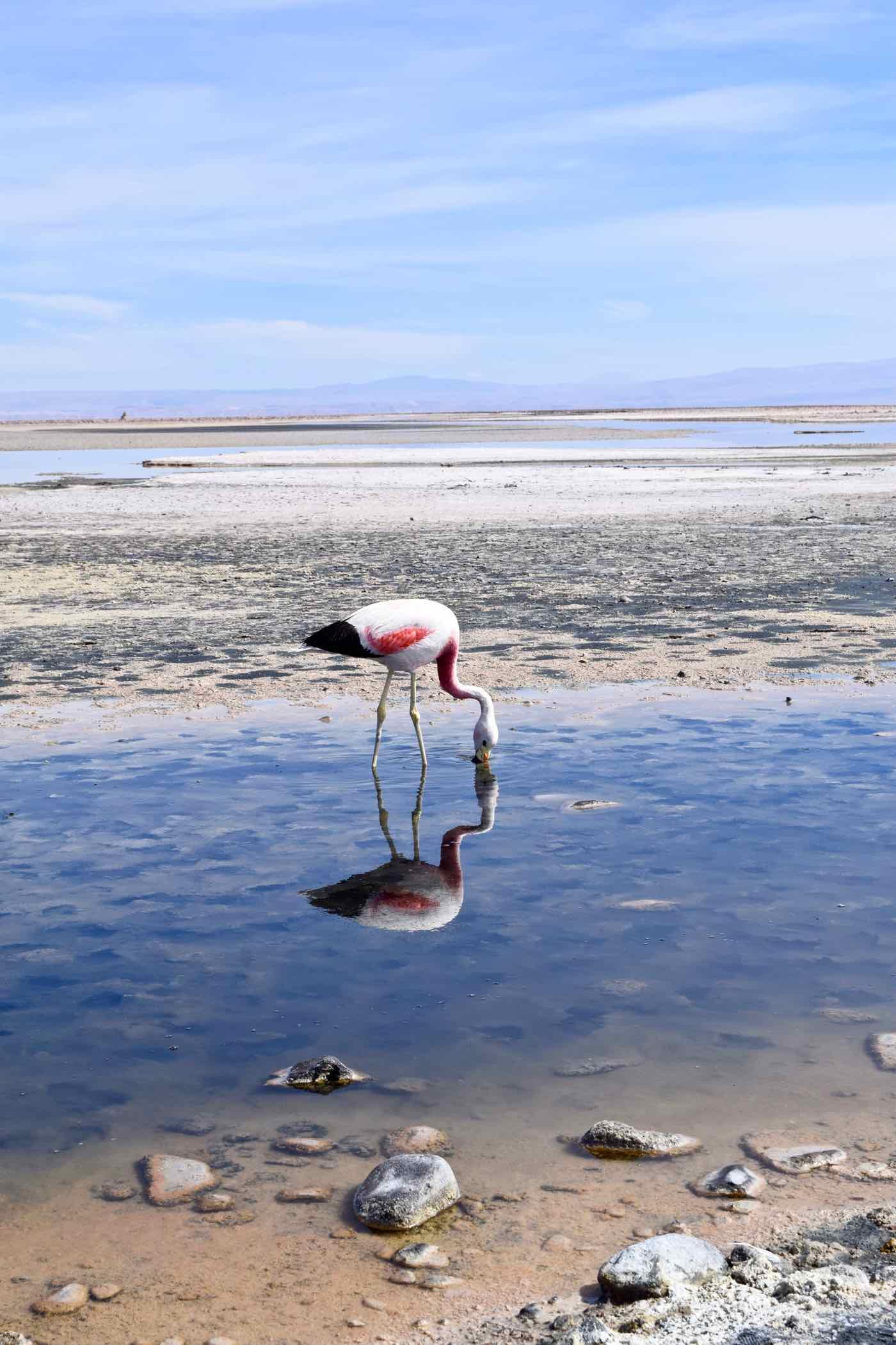 A Tour Of Atacama's Salt Flats and Altiplanic Lagoons