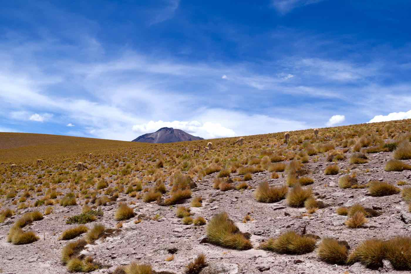 Atacama Highlands, Chile