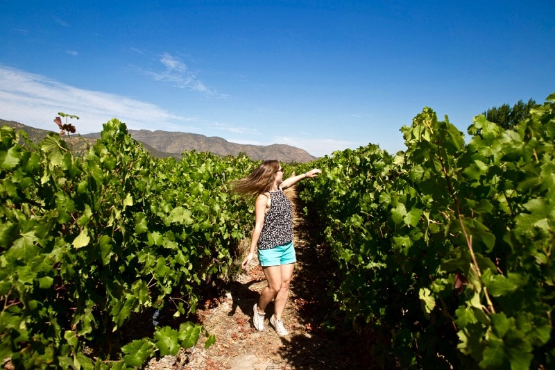 Exploring the vineyards at Vina Montes, Colchagua Valley, Chile