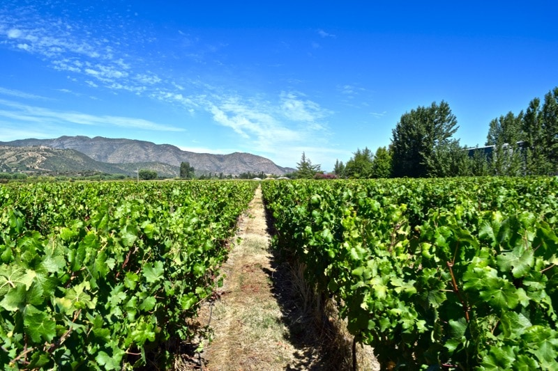 Vineyards at Vina Montes, Colchagua Valley, Chile