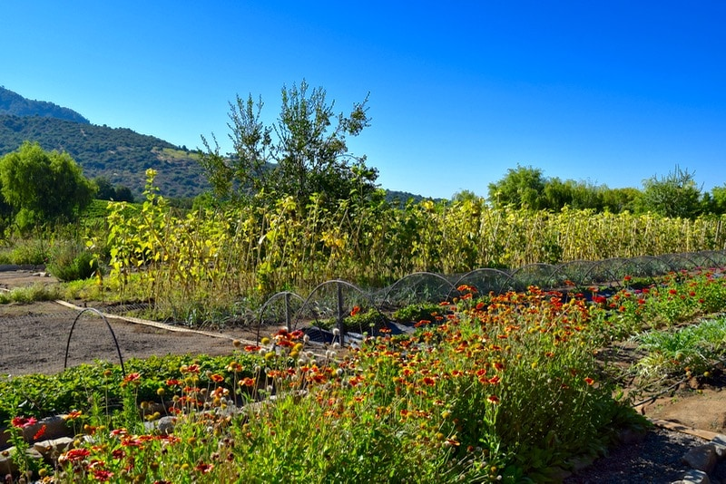 Beautiful gardens at Lapostolle, Colchagua Valley, Chile
