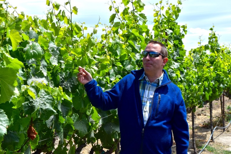 Mark from Green Dream Tours in the vineyards at Larson Family Winery, Sonoma Valley, California