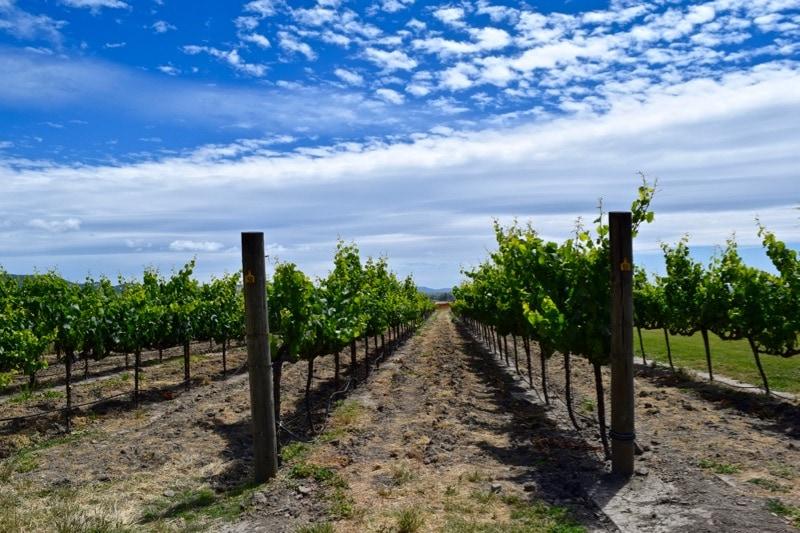 Larson Family Winery, Sonoma Valley, California