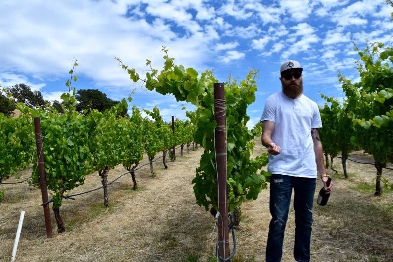 Learning about the vines at Nicholson Ranch, Sonoma Valley, California