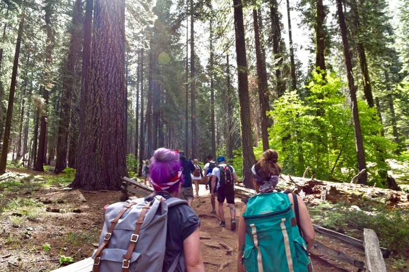 Trekking through Tuolumne Grove, Yosemite