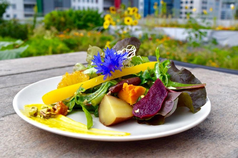 Delicious salads at Op Het Dak, Rotterdam
