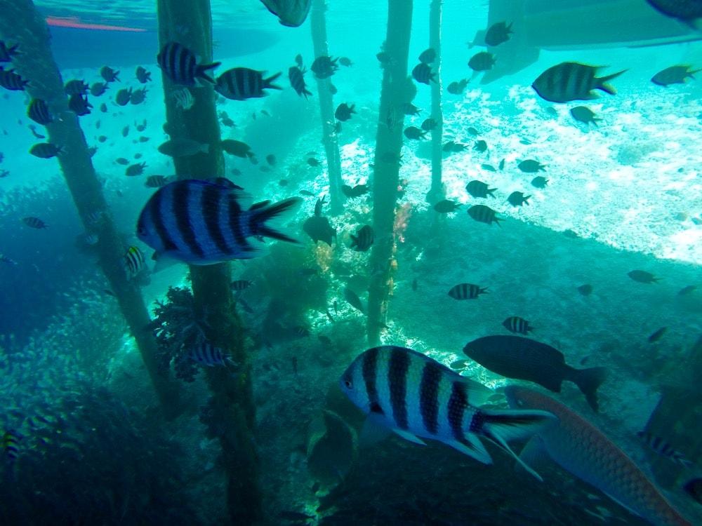 Fish in Raja Ampat, Indonesia