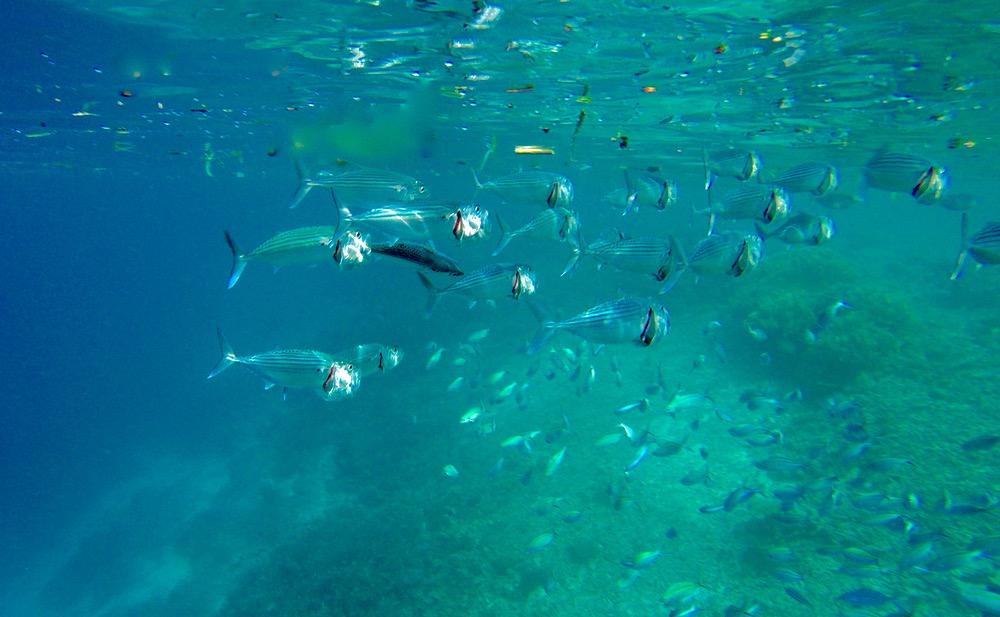 Snorkelling in Raja Ampat, Indonesia