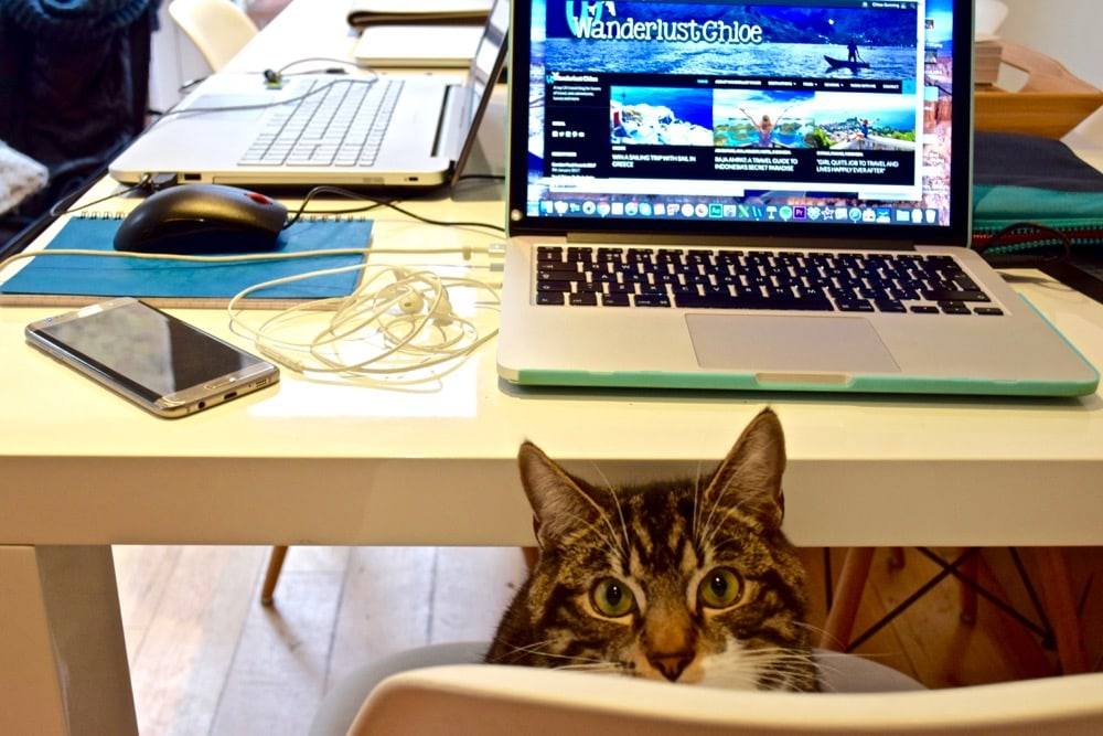 Enzo helping with my blog