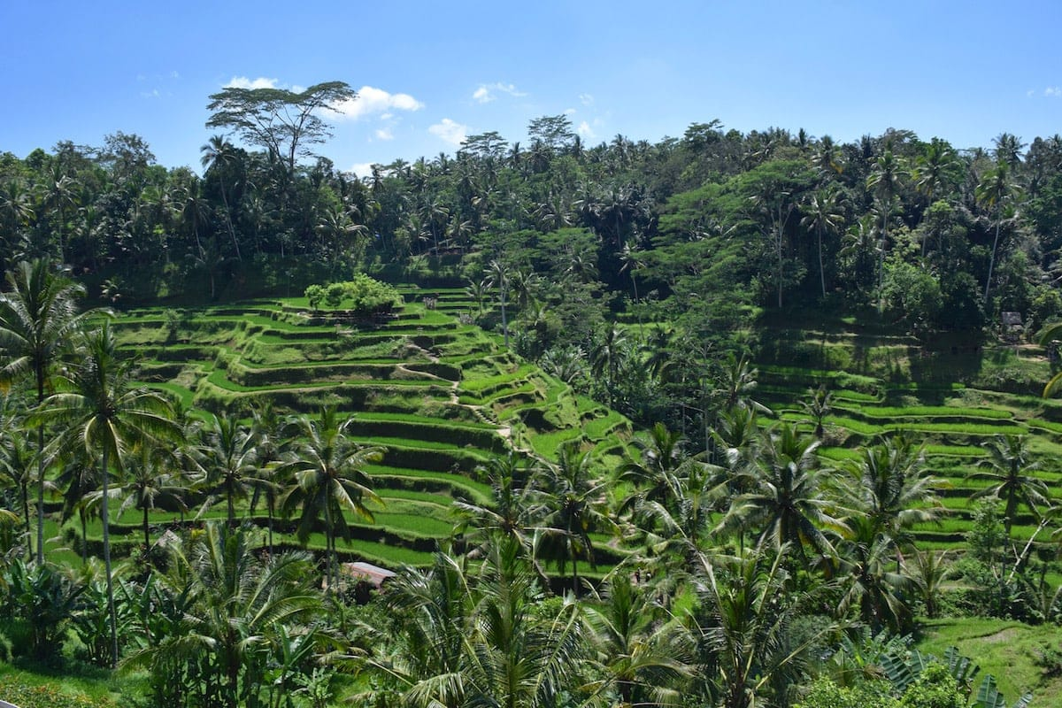 Tegalalang Rice Terraces, near Ubud, Bali
