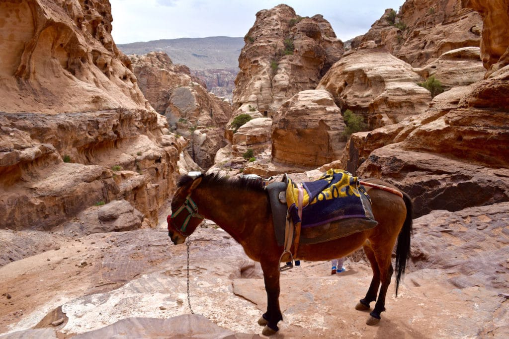 Donkey on the route in Petra, Jordan