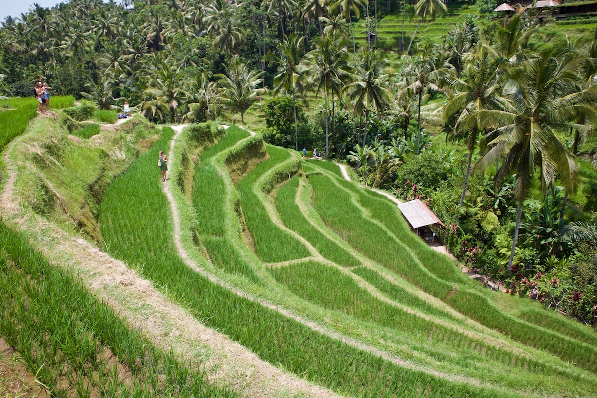 Tegalalang Rice Terraces, near Ubud, Bali (Photo: Macca Sherifi)