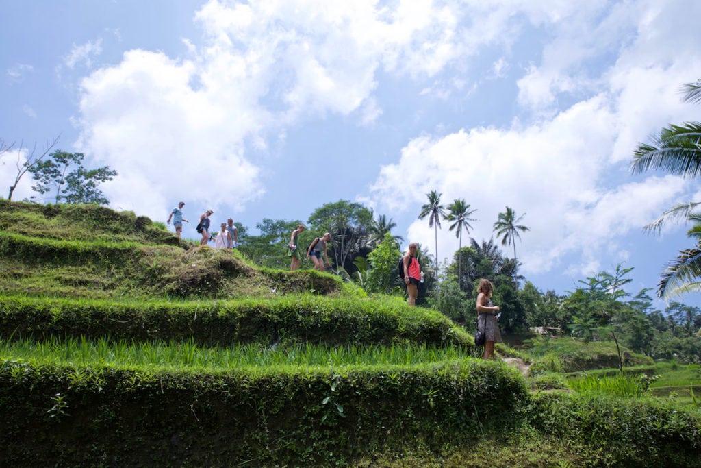Tegalalang Rice Terraces, near Ubud, Bali (Photo: Macca Sherifi)