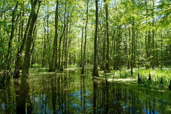 Exploring Bayou Pigeon - the swamps in Louisiana