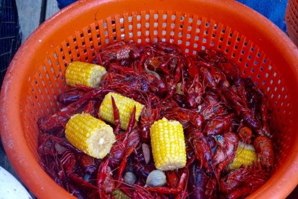 Crawfish at the R Bar crawfish boil, New Orleans