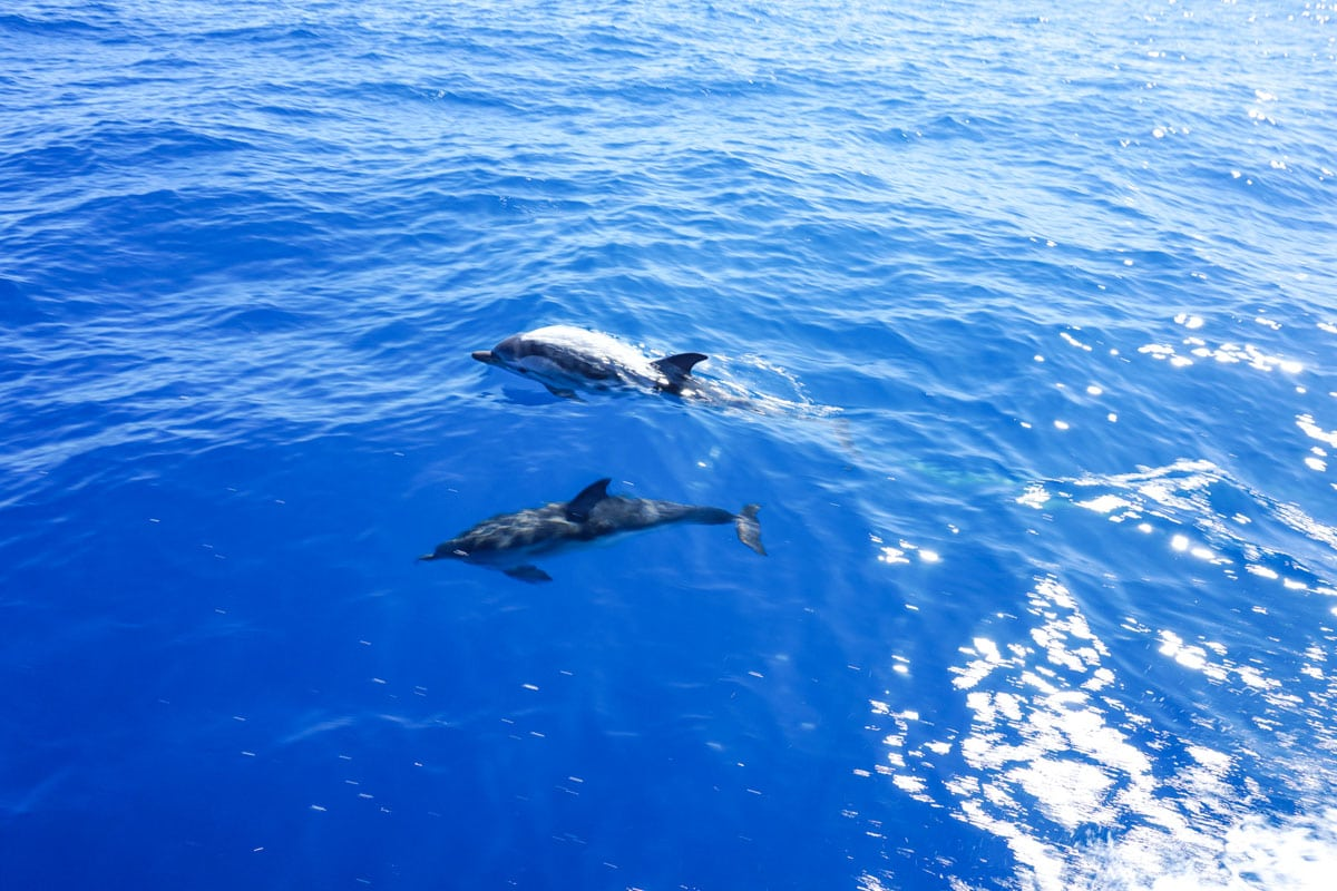 SPOTTED: Dolphins in Sicily!