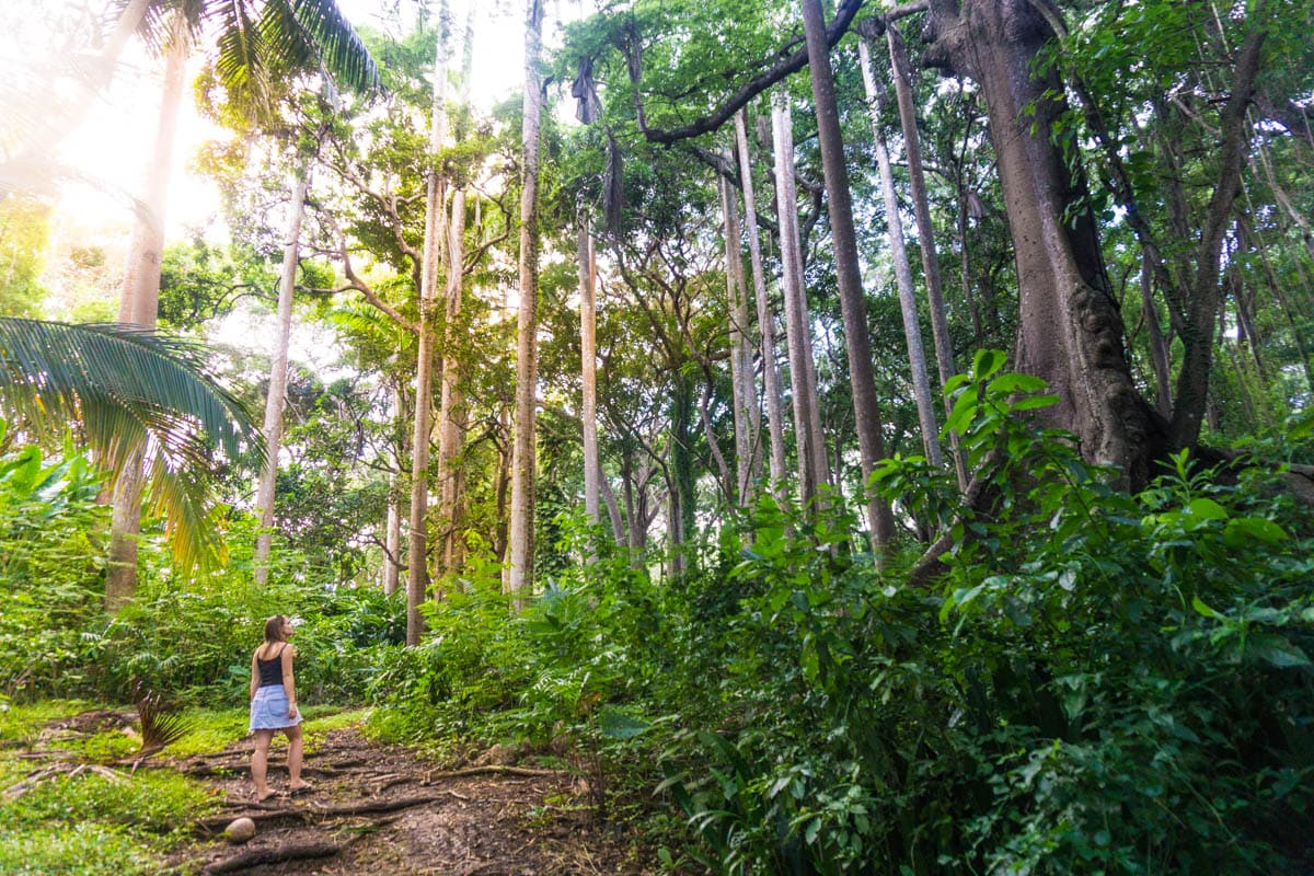 Exploring the forest near St Nicholas Abbey, Barbados