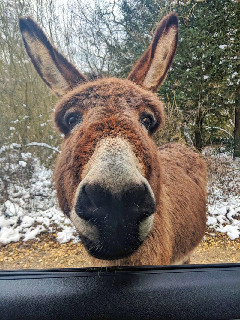 Donkey selfie!