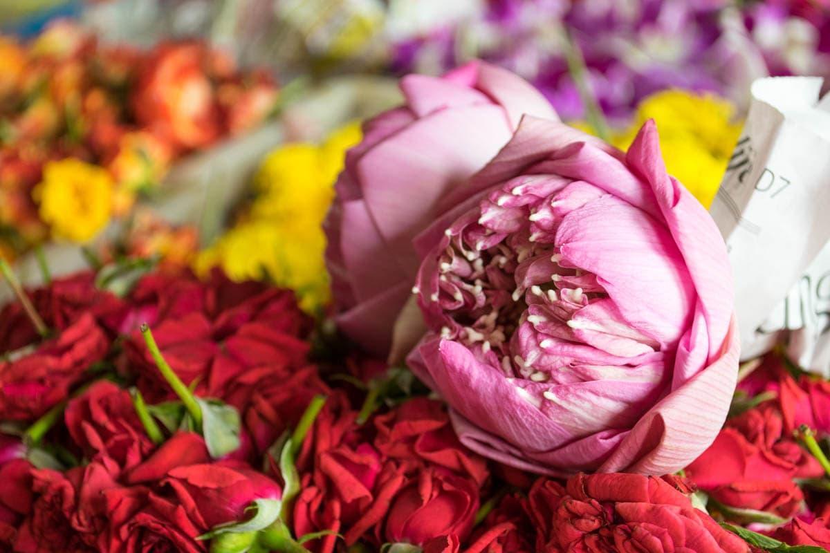 Belles fleurs dans la petite Inde, Singapour