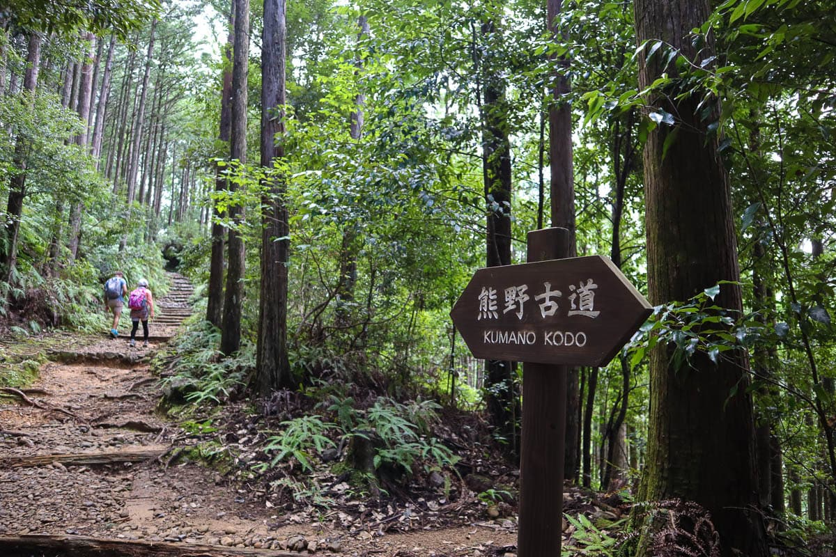 Trekking through the forests on the Kumano Kodo trek, Japan