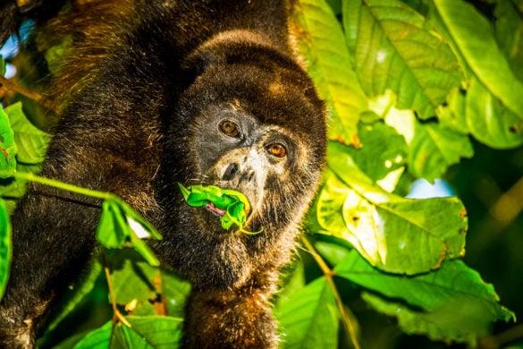 Monkeys at Lapa Rios, Costa Rica (Photo: Lapa Rios)