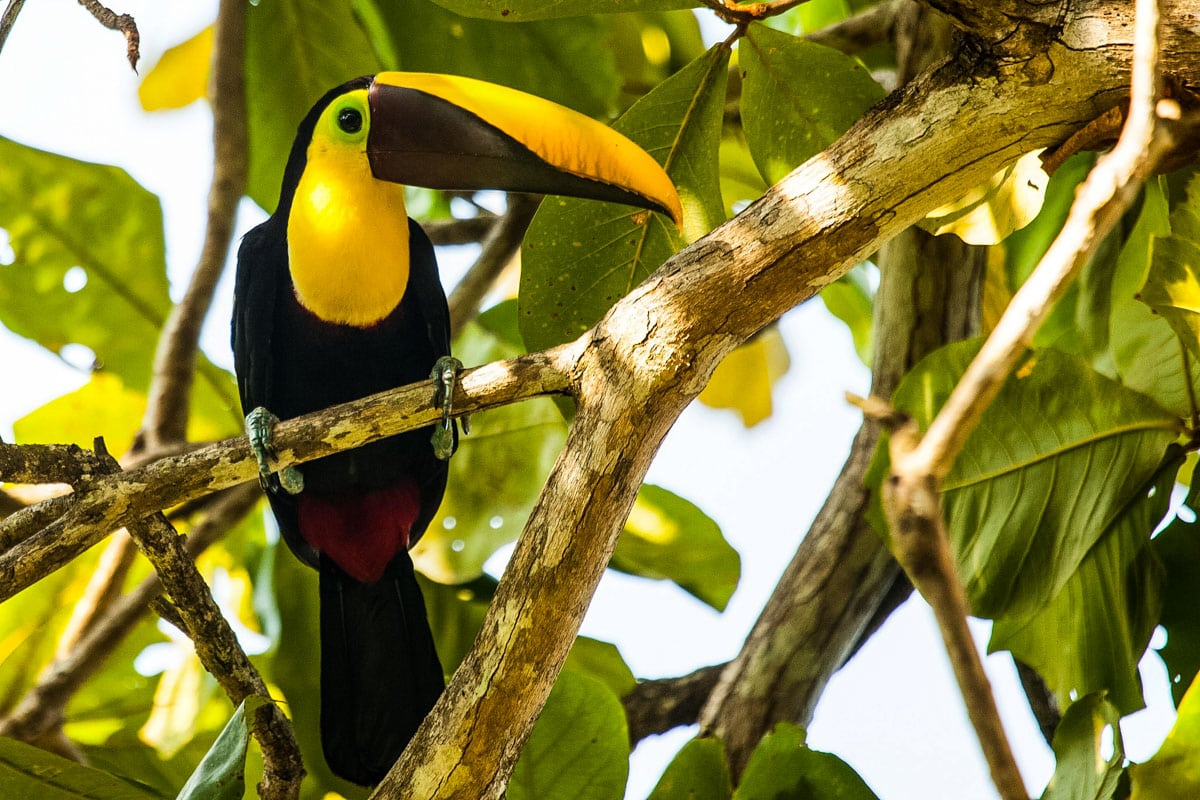 Toucan at Lapa Rios, Costa Rica (Photo: Lapa Rios)