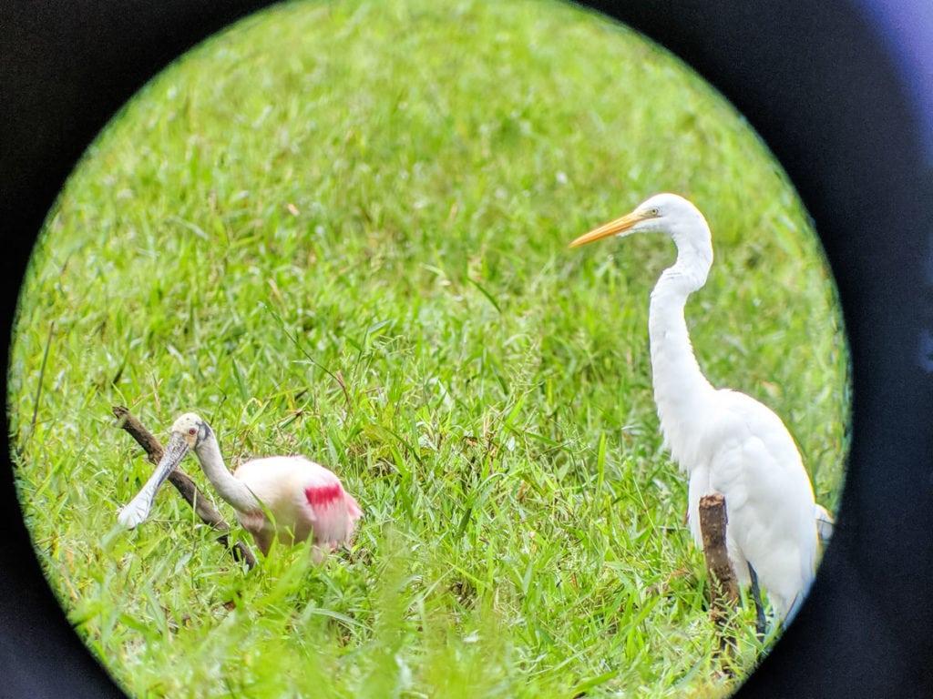 Wildlife spotting through a telescope in Corcovado National Park, Costa Rica