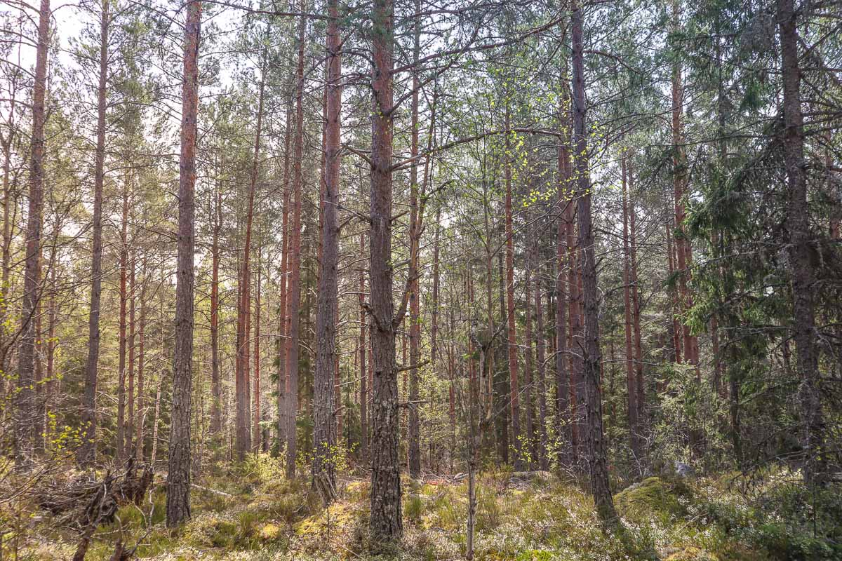 Forests on the Sörmlandsleden, Sweden