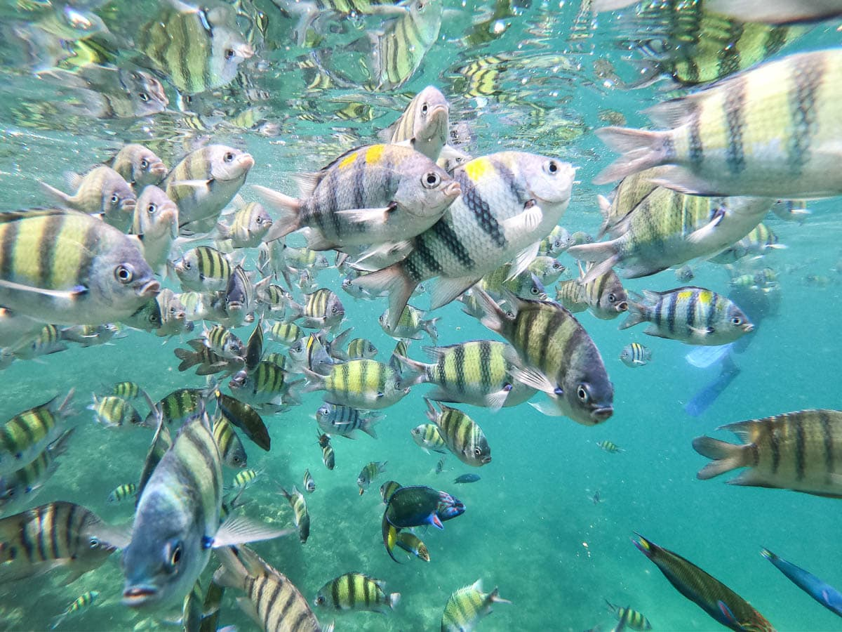 Tropical fish on our snorkel trip