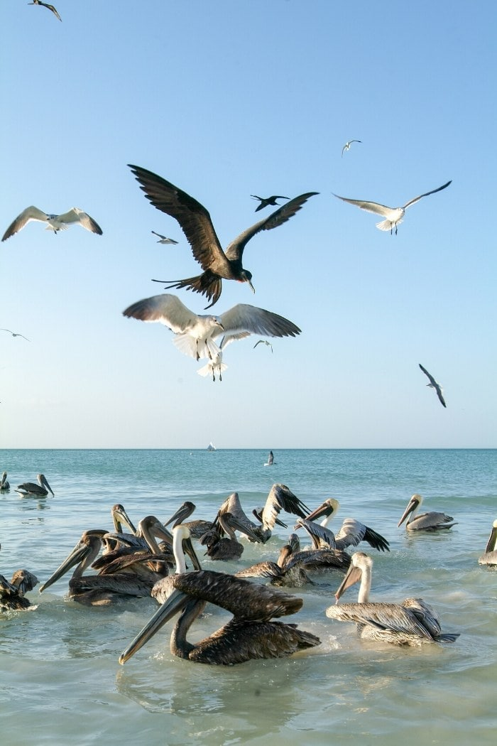 Birds on Isla Holbox, Mexico
