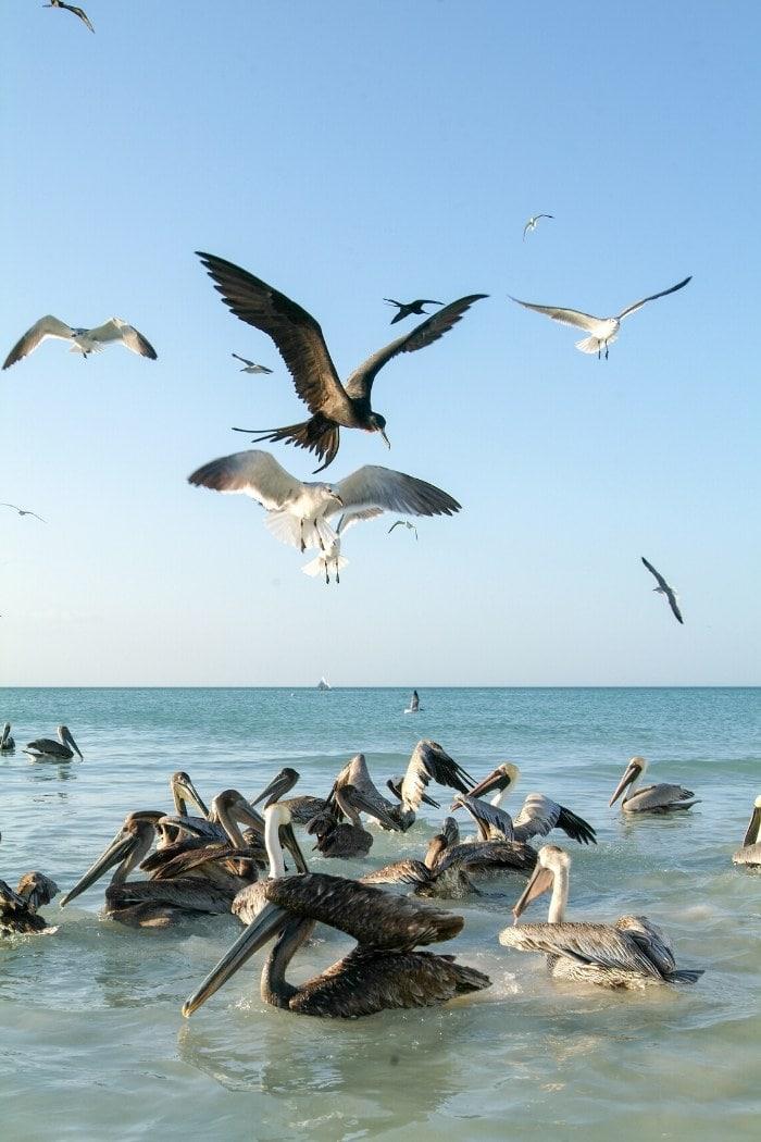 Birds on Isla Holbox, Mexico