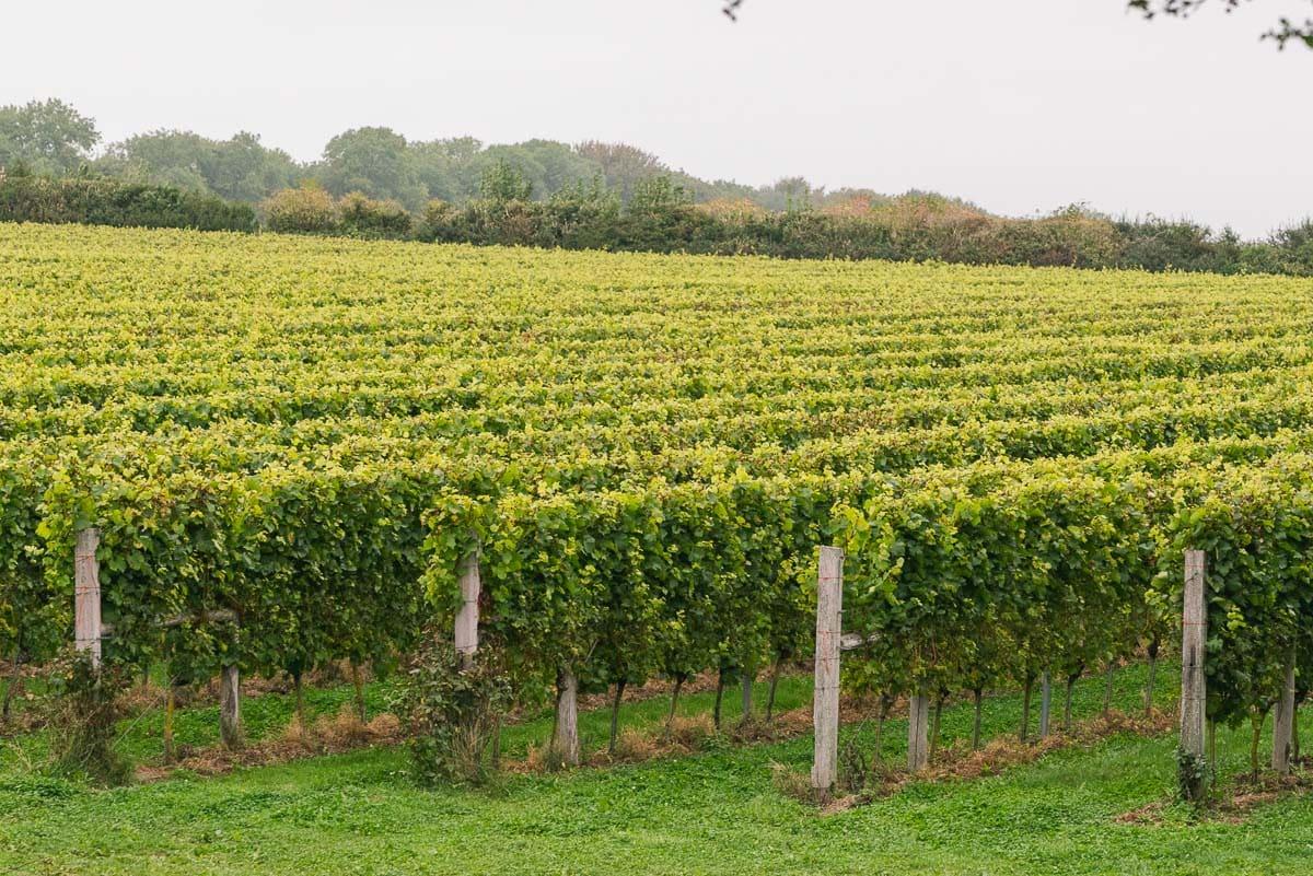 Langham Wine Estate, Dorset