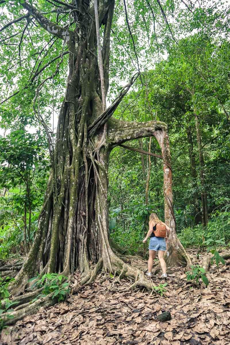 Exploring Corcovado in Costa Rica