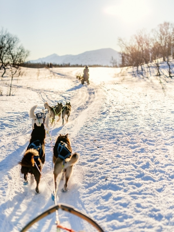 Dog sledding is one of the most popular things to do in Lake Tahoe in winter