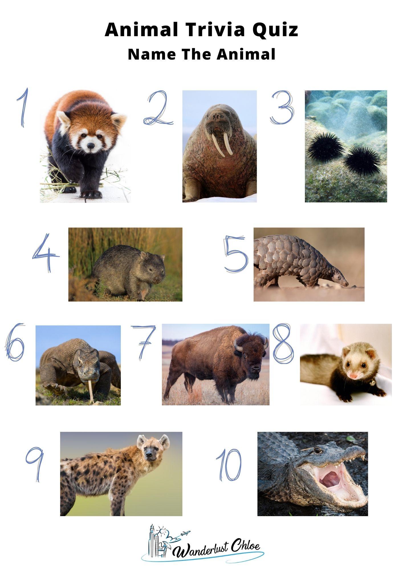 Animal Trivia Quiz