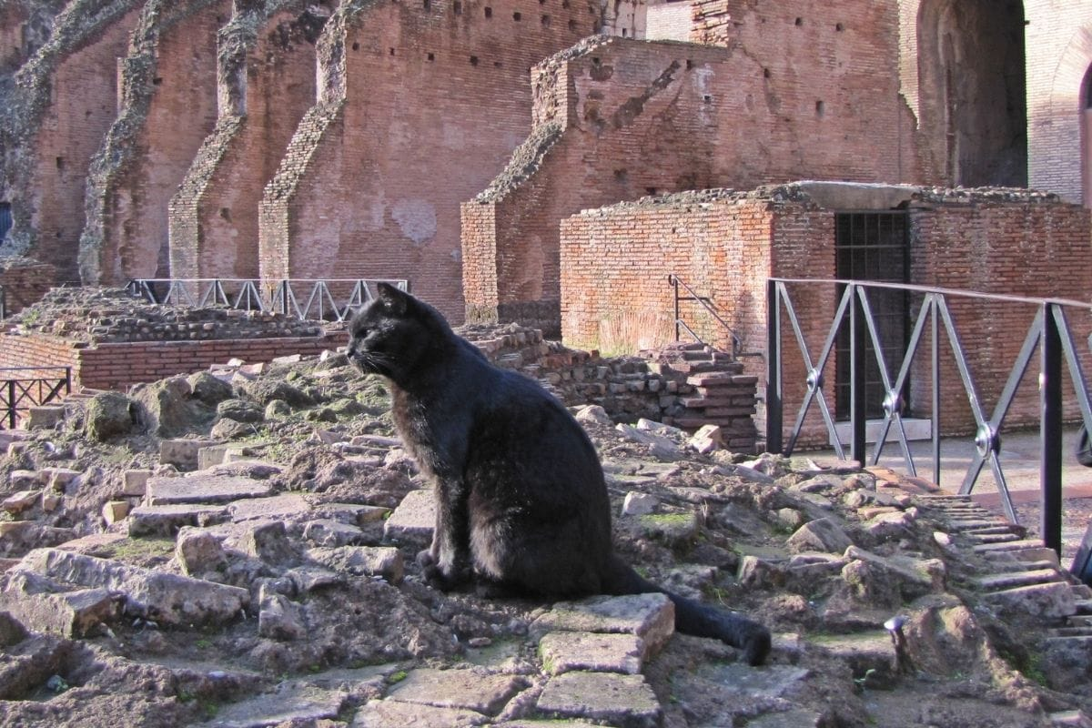 Cat at the Colosseum in Rome