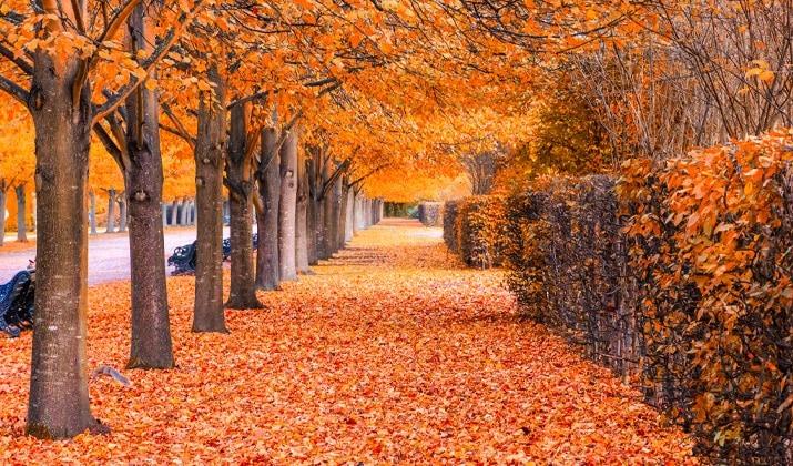 Pretty autumn views in Kittatinny Valley State Park