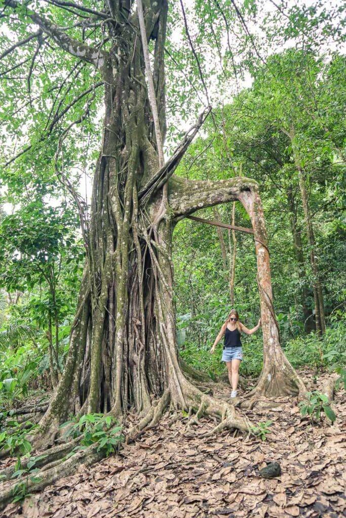 Exploring Corcovado National Park