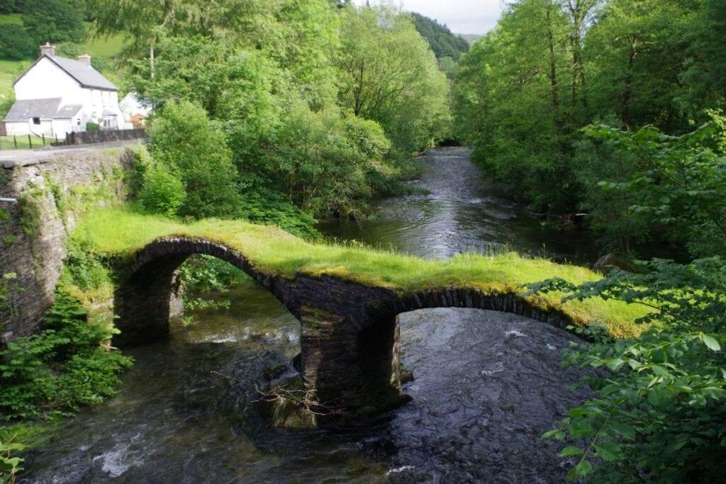Welsh language survival experience